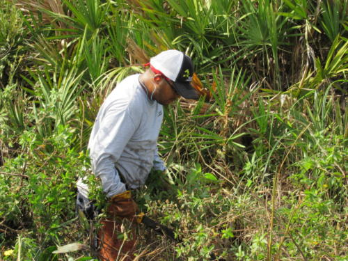 EcoTech Staff Completing Exotic Removal Activities
