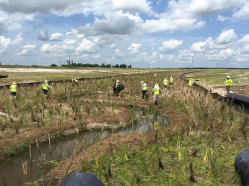 EcoTech Staff Completing Wetland Creation